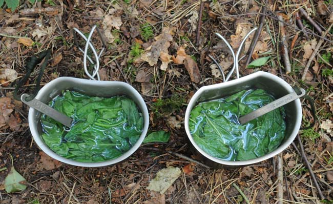 Two mugs of fresh mint tea, made with Mentha aquatica
