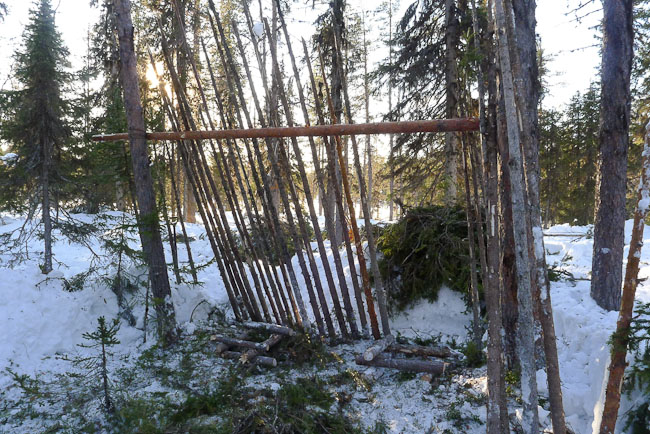 Skeleton of lean-to shelter in boreal forest