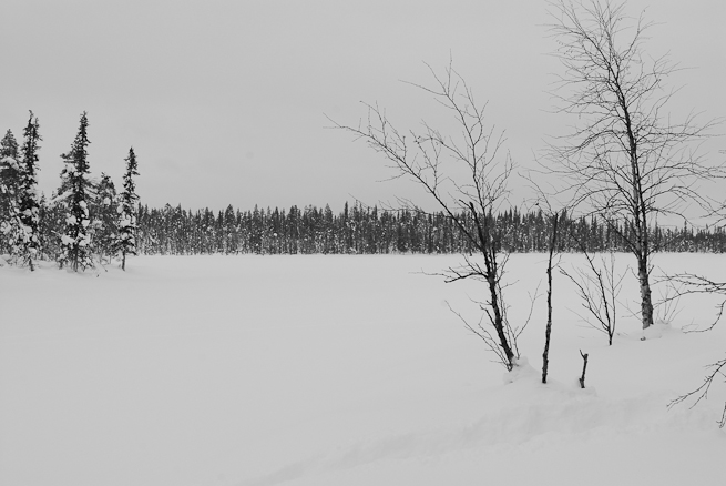 Black and white photo of the northern forest