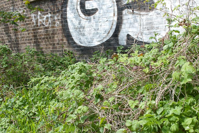 Bramble patch and graffiti.