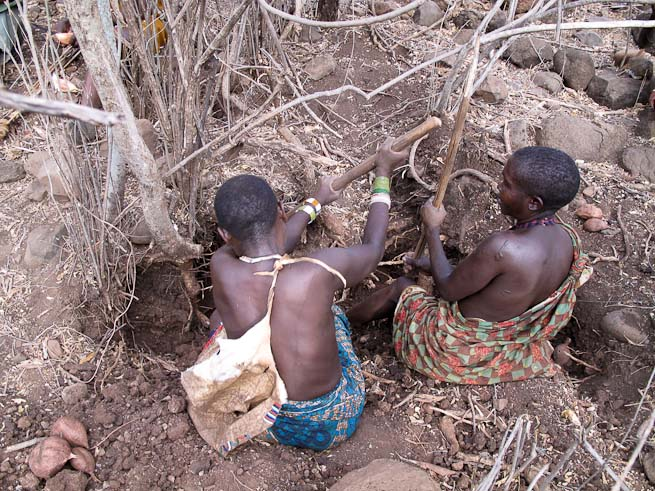 Hadzabe women digging for tubers
