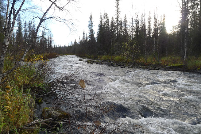 River running through boreal forest in Sweden