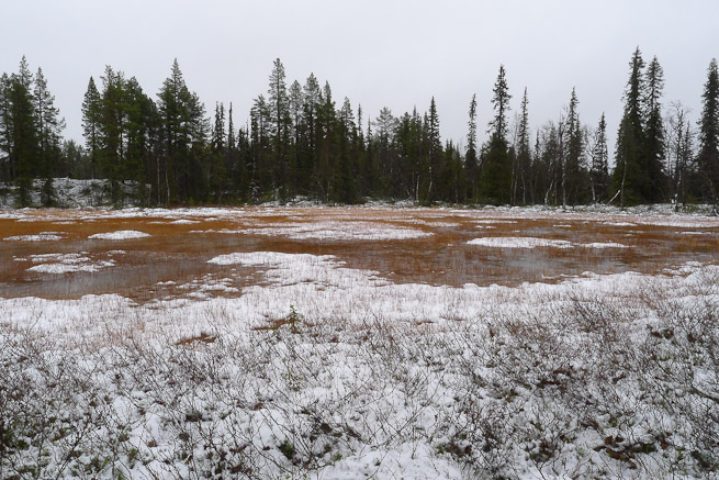 Swampy area highlighted by surrounding snowy ground