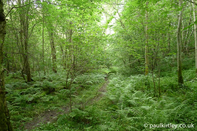 Woods - verdant and plentyful