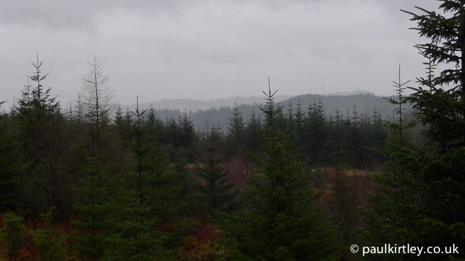 grey wet and cold forest