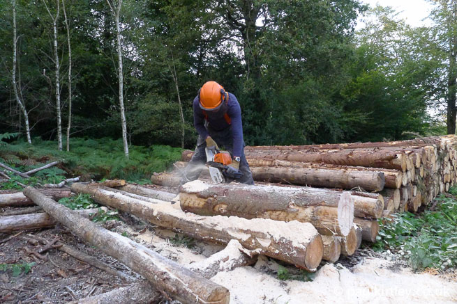 Man working with chainsaw amongst logs