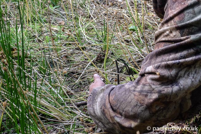 Setting a rabbit snare