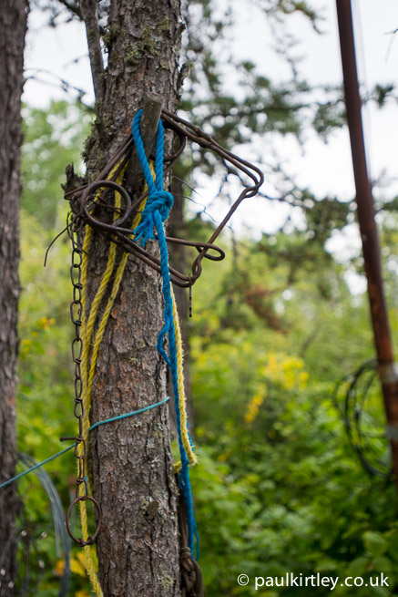 body grip trap hanging on a tree