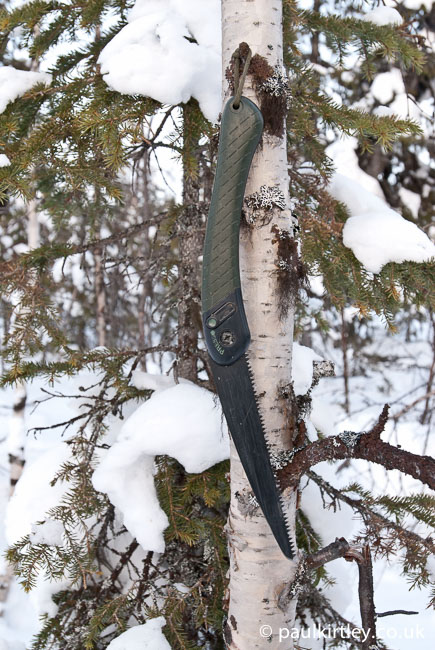 A laplander folding saw hanging on a birch tree