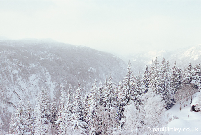 Norway Spruce on hillside in snow