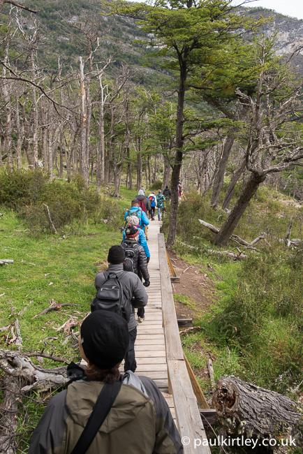 People walking single file along a wooden boardwalk amongst Southern Beech trees