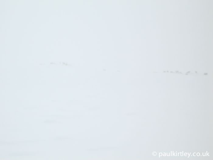 Reindeer through the clouds in near white out conditions in Norway