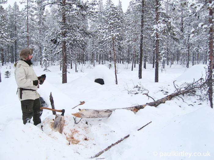 Man having just felled a pine tree in Sweden in winter