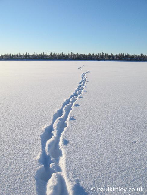 Reindeer tracks through virgin snow across a river in Sweden