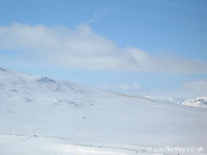 Reindeer in the distance in a snowy Norwegian mountain environment