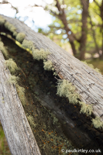 Lichen on dead wood in Patagonia