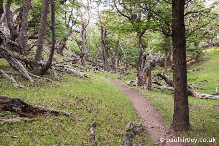 Southern Beech, Nothofagus, woodland