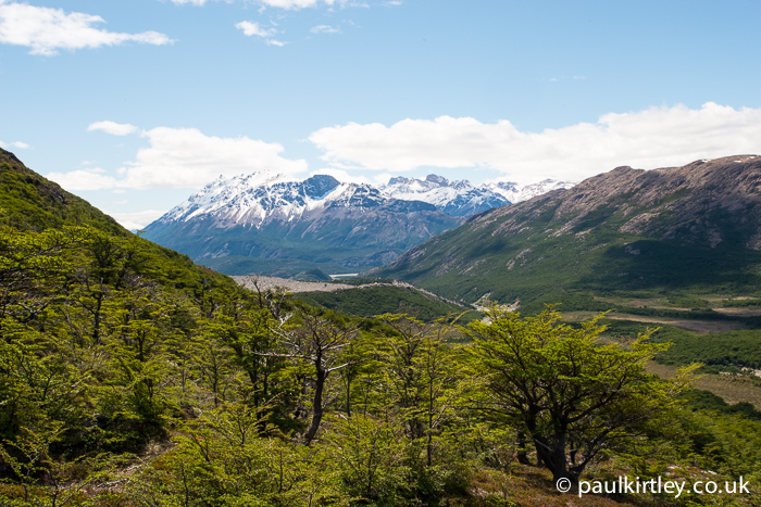 Lenga forest in southern Patagonia