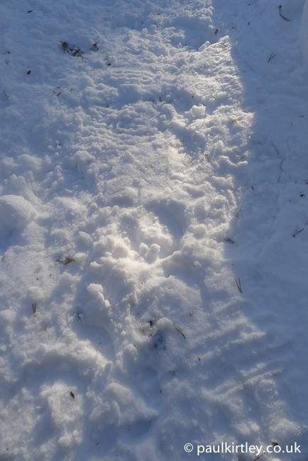 Circular reindeer footrprints