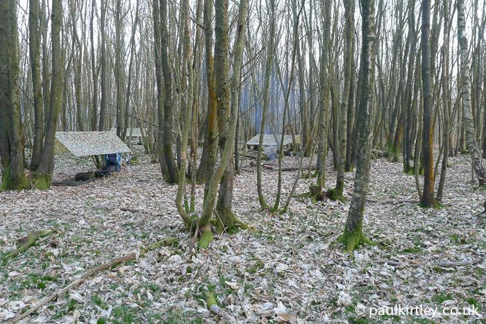 tarps in barren woods
