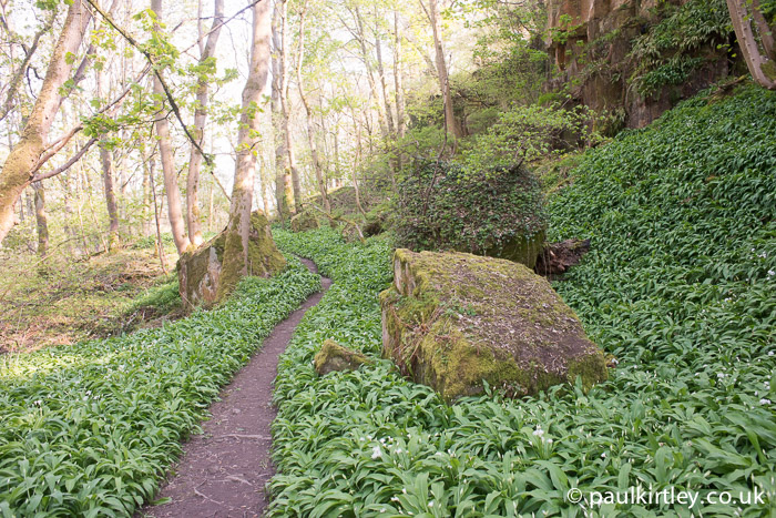 wild garlic trail