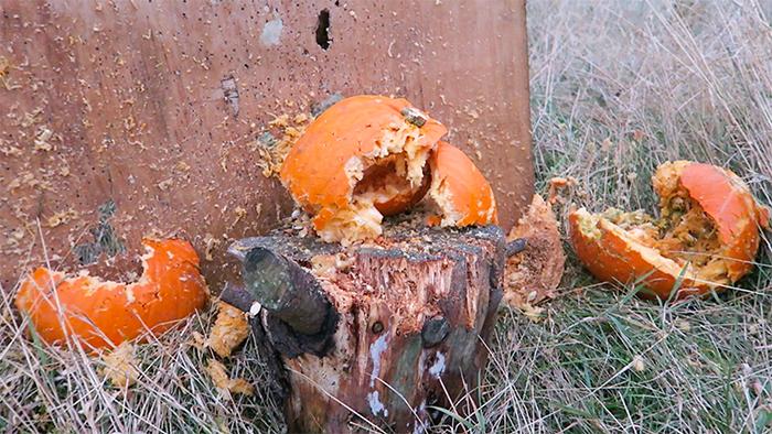 Smashed pumpkins