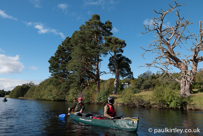 A common feature along most of the length of the river are Scots Pine, Pinus Sylvestris. Photo: Paul Kirtley