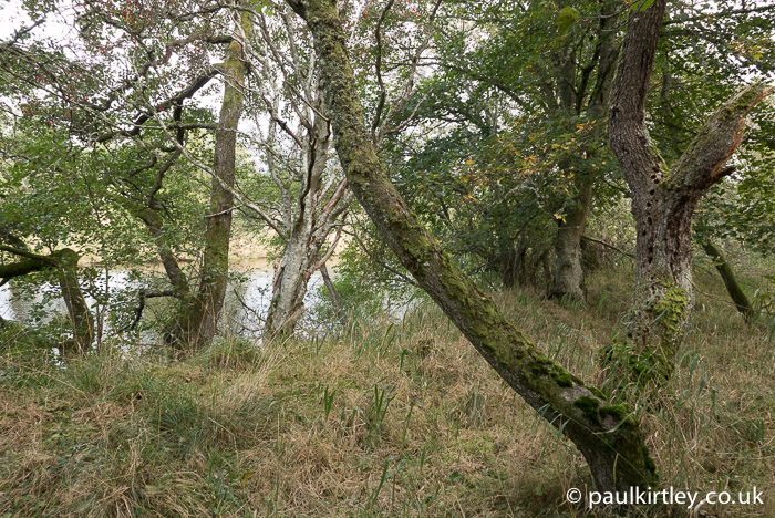 Off the river and into woodland.  I really enjoy this type of travel.  I love paddling and I love camping in woodland.  This journey combines the two perfectly. Here you can see alders and sycamores lining the margin between the river and this grassy camping spot. Photo: Paul Kirtley