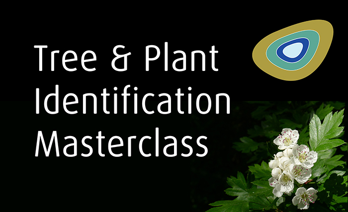 Tree and Plant Identification Masterclass postcard