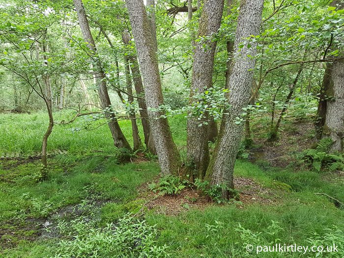 Post image for Wild Wanderings 8 – Damp And Green
