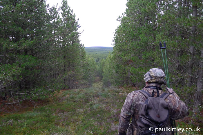 Man in camouflage clothing looking out over forested area of Scotland