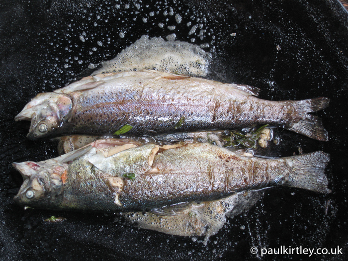 Pan fried trout in Muurikka pan