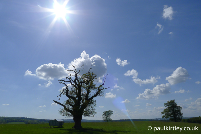 The sun and a tree