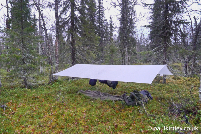 Tarp in wild coniferous forest