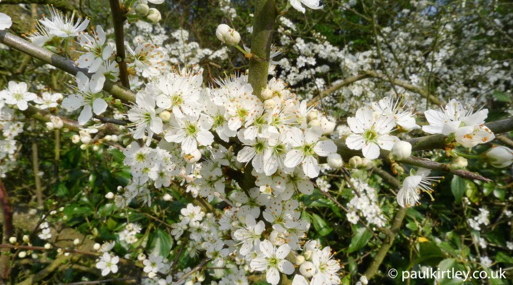 vibrant white blossom