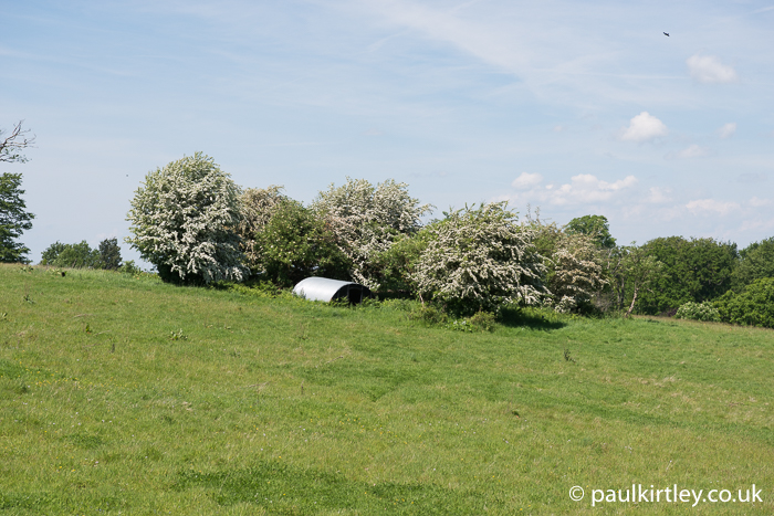 Green bushes with white flowers across a field