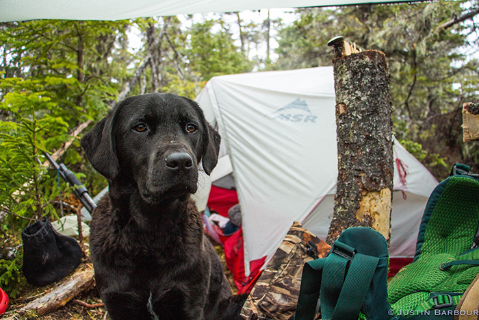 Black dog stands in front of wilderness camp