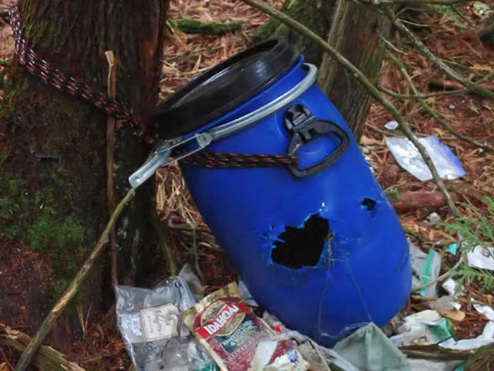 Blue food barrel chewed by bear