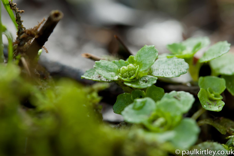 5 Edible Wild Plants – Bushcraft   How to   British Army